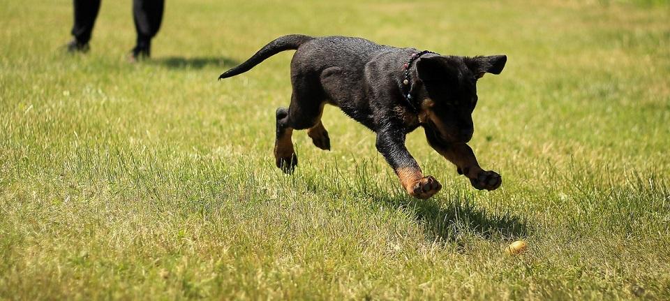 Tips para entrenar a tu perro