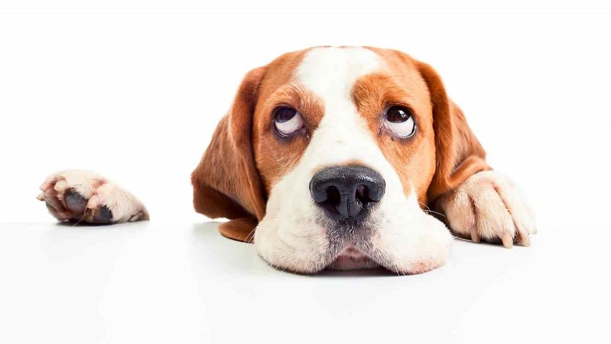 Cosas que solo entenderán las personas que tienen perros