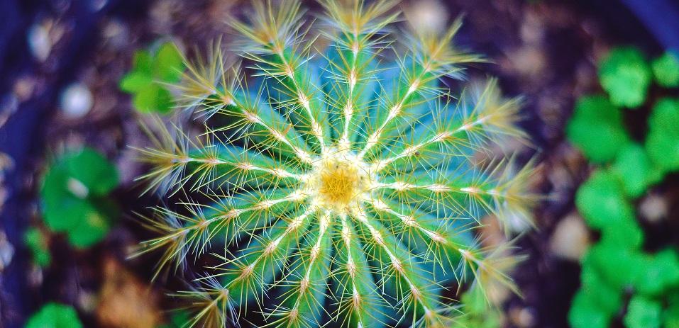 ¿Cómo cuidar un cactus?