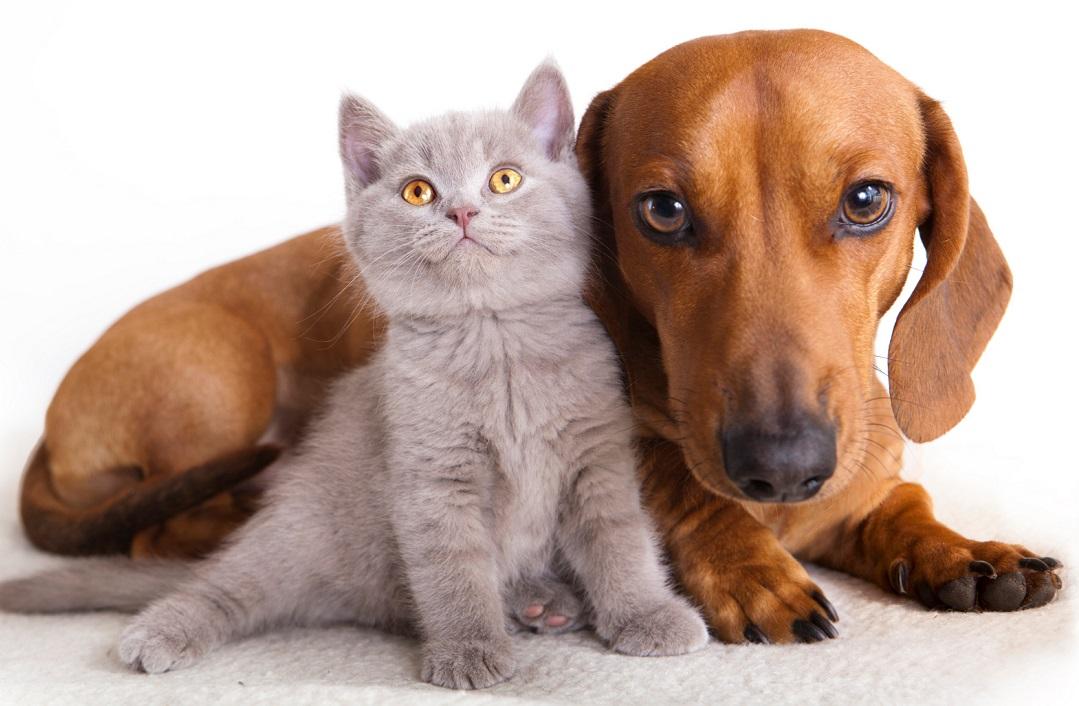 Estas son las mascotas con más seguidores en Instagram