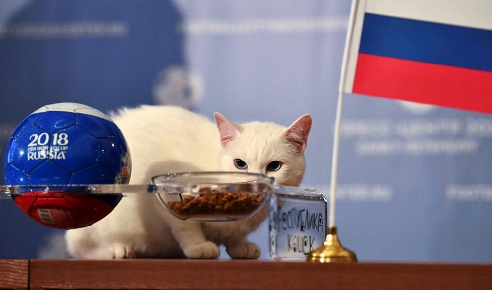 Conocé a Aquiles, el gato profeta de los resultados del Mundial