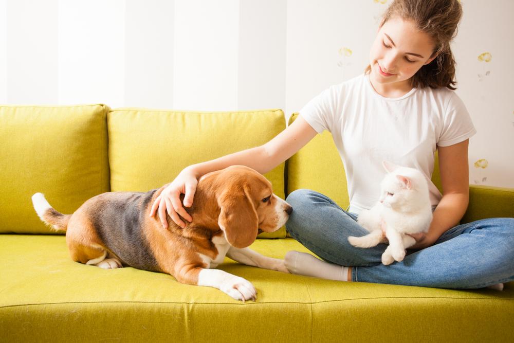 Qué debés considerar para tener una mascota
